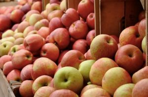 Piney Run Park's  Apple Festival @ Piney Run Park Apple Festival | Sykesville | Maryland | United States